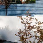 Private residence Heaton Moor view of white rendered wall and Acer Katsura with box balls, topiary, Little Greene Juniper Ash, pine tree, pleached hornbeam, white rendered wall and slatted fence.