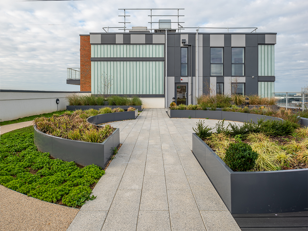 ninth storey roof garden with circular raised beds containing miscanthus and carex and wildflower turf