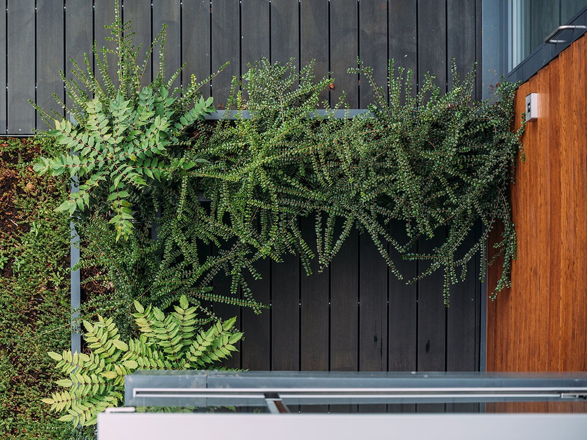 raised planter around apartment with mahonia in viewed from above