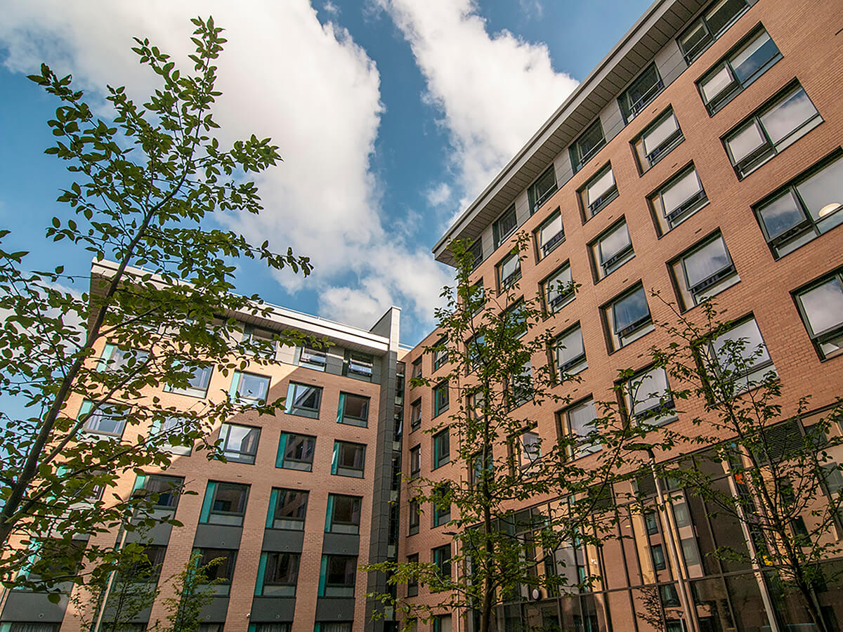 Natural Dimensions View of carpinus betlulus against Fountains Court Leeds Trinity University