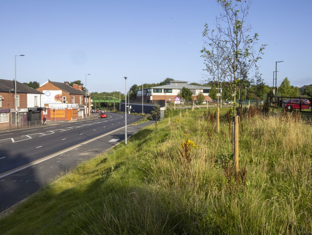 grass embankment with newly planted trees along Hyde Road